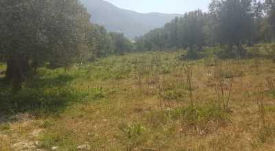 Landwirtschaftsgrundstück mit Olivenbäumen